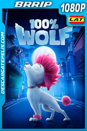 100% Wolf: Pequeño gran lobo (2020) 1080p BRRip Latino