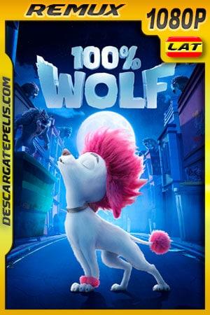 100% Wolf: Pequeño gran lobo (2020) 1080p Remux Latino