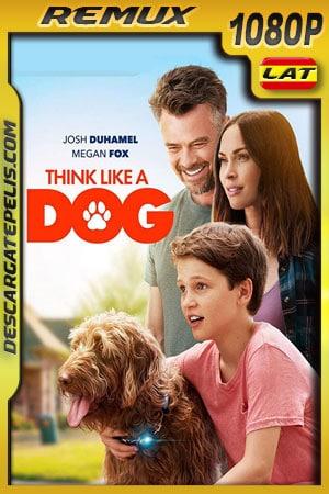 Think Like a Dog (2020) 1080p BDRemux Latino – Ingles