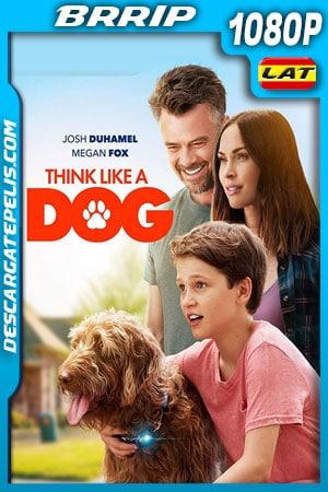 Think Like a Dog (2020) 1080p BRrip Latino – Ingles