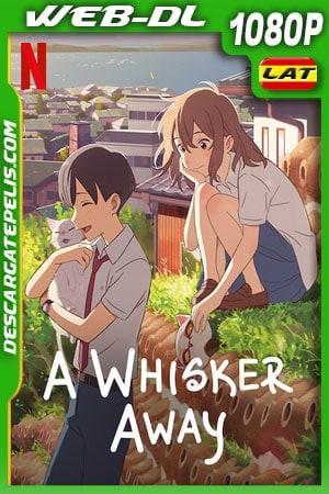 Amor de gata (2020) 1080p WEB-DL Latino – Ingles – Japones