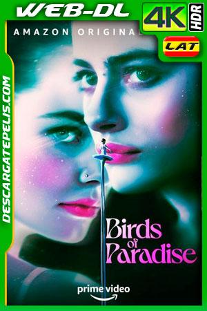 Aves del paraíso (2021) 4k WEB-DL HDR Latino