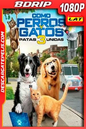 Como perros y gatos 3 Patas Unidas (2020) 1080p BDRip Latino