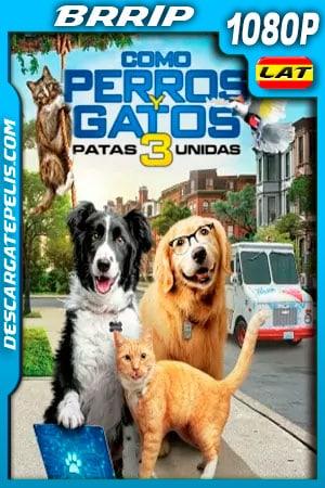 Como perros y gatos 3 Patas Unidas (2020) 1080p BRRip Latino
