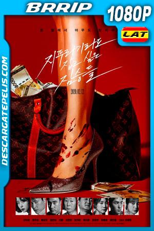 Golpe de suerte (2020) 1080p BRrip Latino
