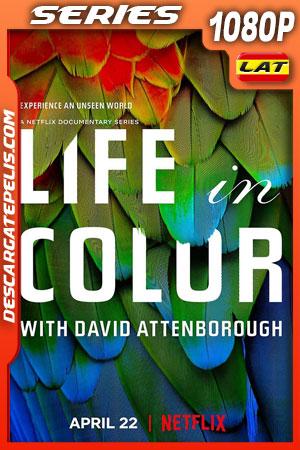 La vida a color con David Attenborough (2021) Temporada 1 1080p WEB-DL Latino