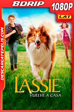 Lassie Vuelve a Casa (2020) 1080p BDRip Latino