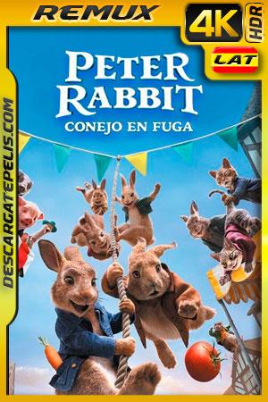 Peter Rabbit 2 Conejo en fuga (2021) 4K Remux HDR Latino