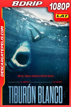 Tiburón blanco (2021) 1080p BDrip Latino