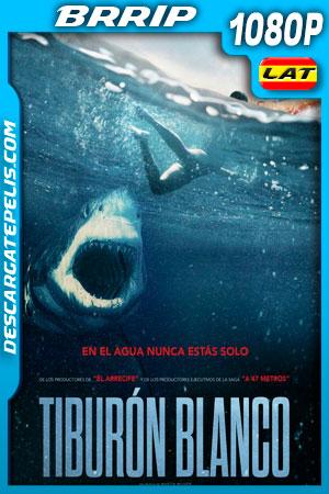 Tiburón blanco (2021) 1080p BRrip Latino