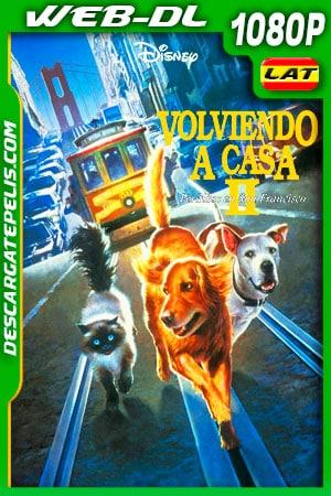 Volviendo a casa 2: Perdidos en San Francisco (1996) 1080p WEB-DL AMZN Latino