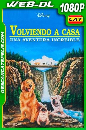 Volviendo a casa: Una aventura increíble (1993) 1080p WEB-DL AMZN Latino
